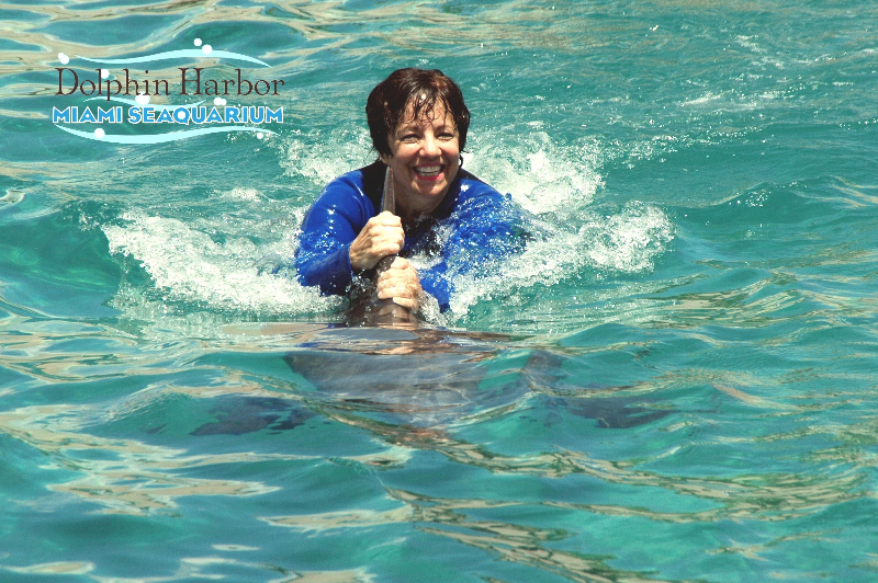 Swimming with a Dolphin