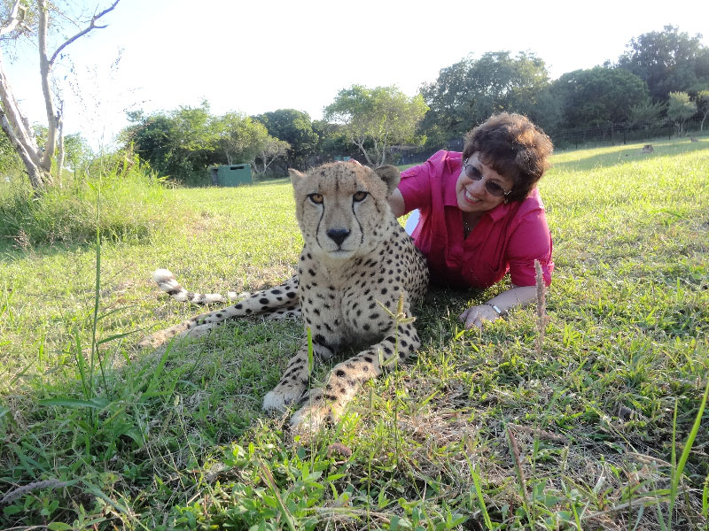 Laying Down with a Live Full Grown Cheetah in South Africa